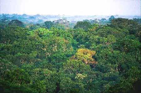 el bosque amazonico