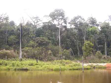 Riberalta porvenir parte de la mancomunidad norte for Criaderos de pescados colombia