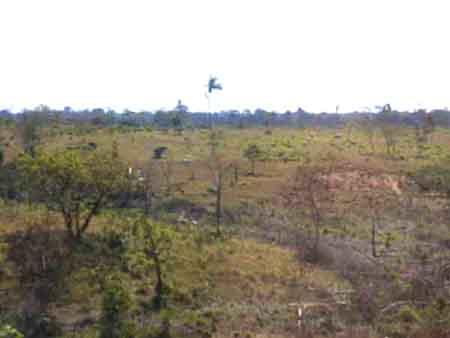 paisaje de la ganadería extensiva