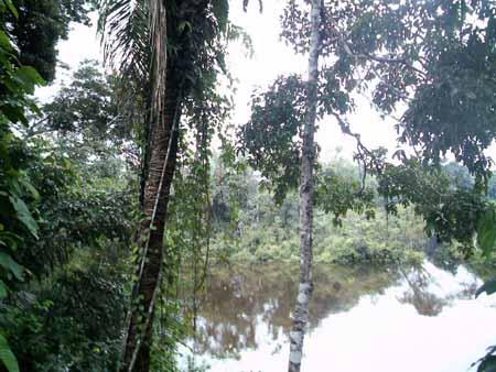 paisaje en el río Manuripi