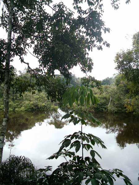 paraje Amazónico
