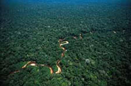 Un pequeno río en la selva