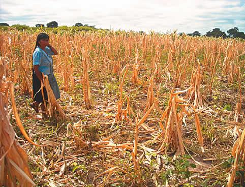 Gobernación de Potosí: 32 mil familias afectadas por fenómenos naturales según informe final